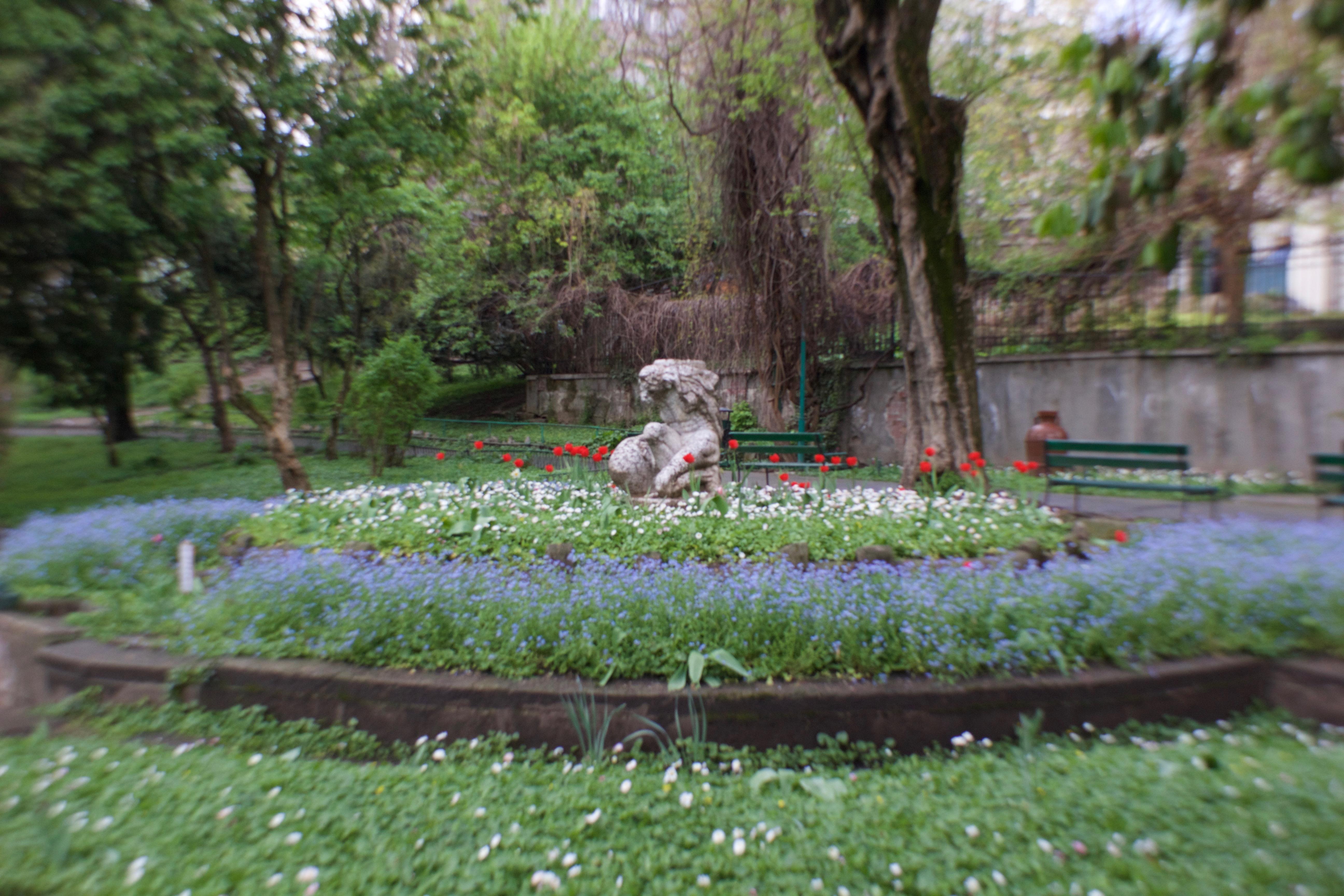 Frail spring blooms in Cismigiu Gardens