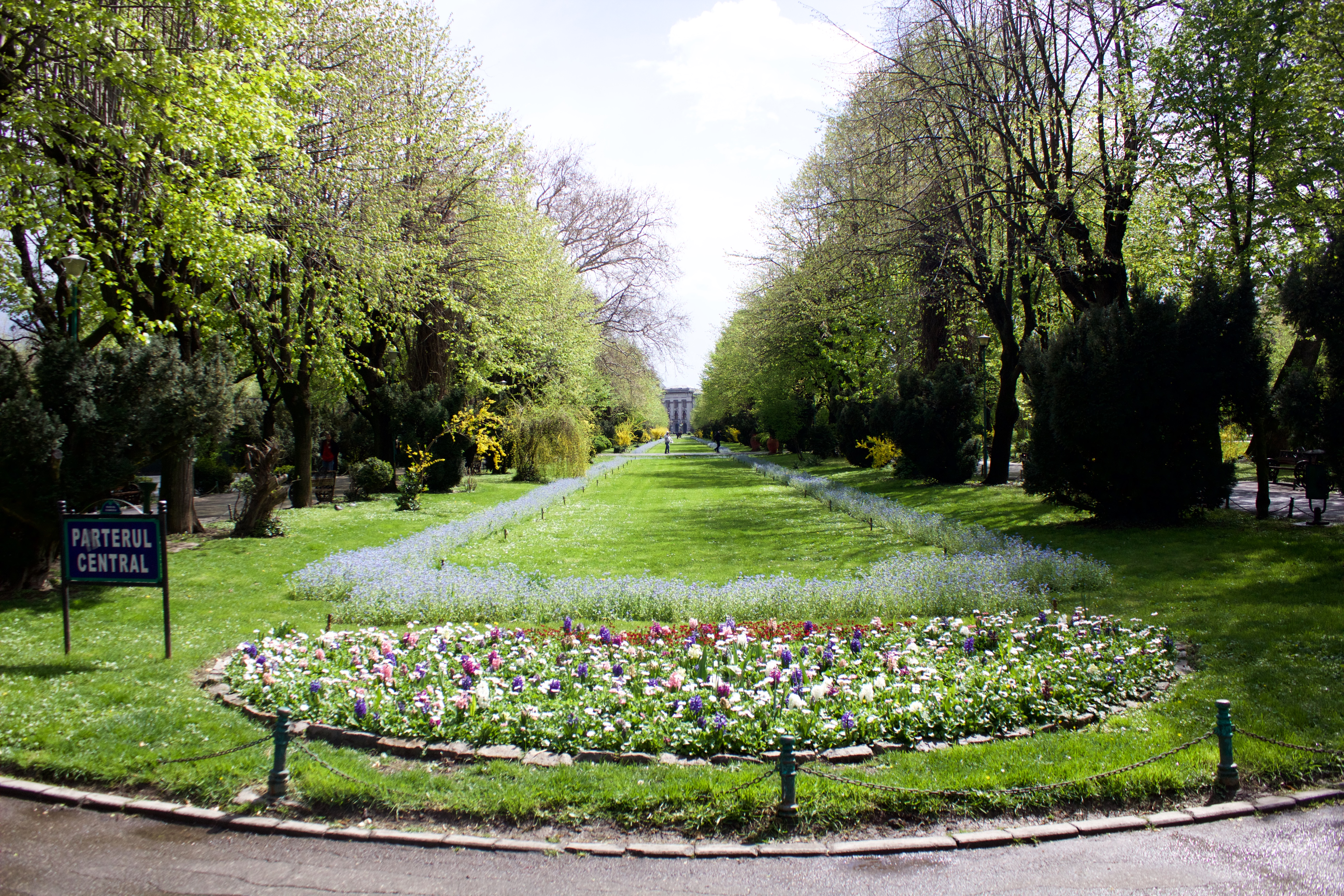 Spring blooms in Cismigiu Gardens