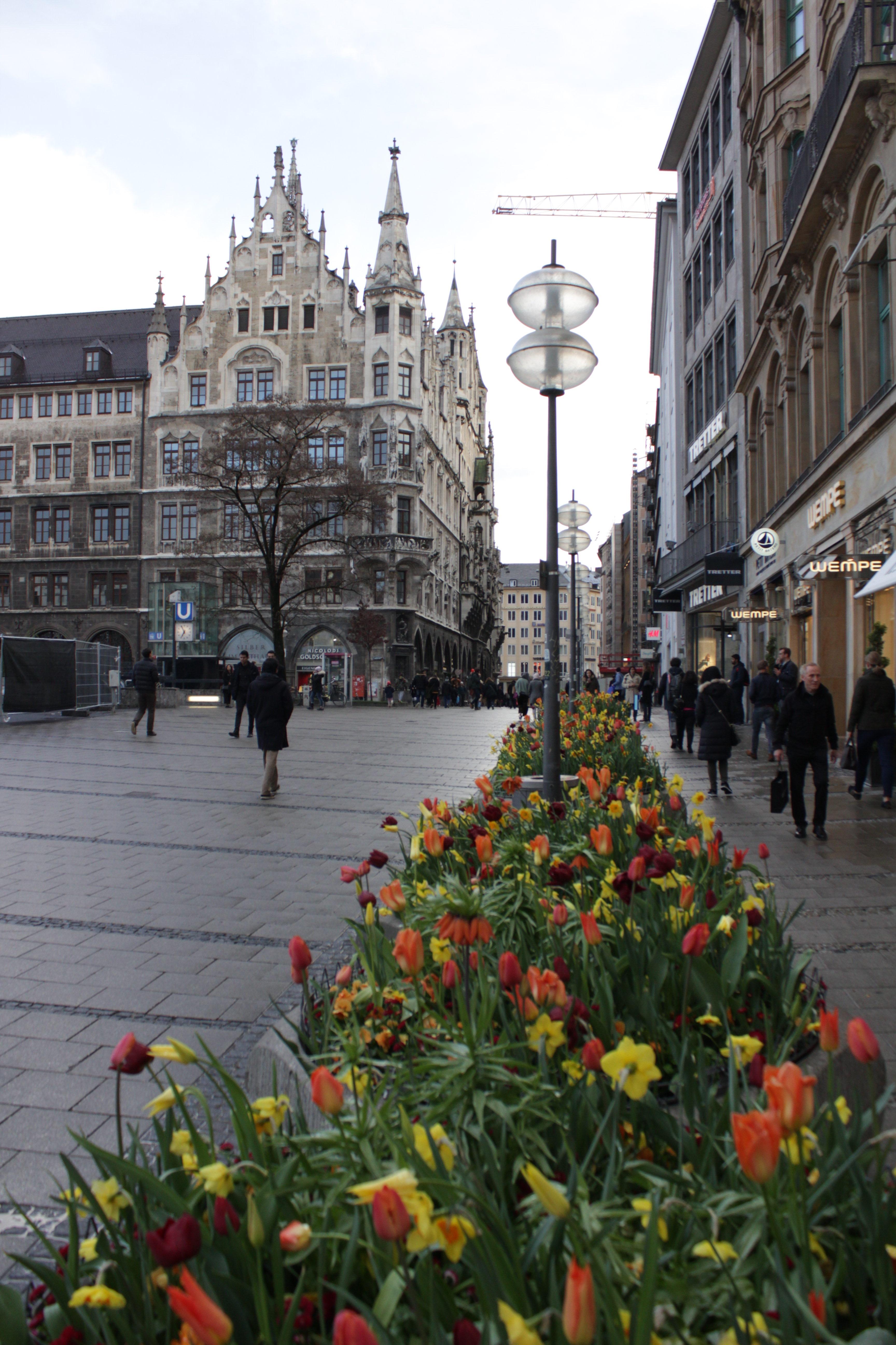Blooming tulips near Marienplatz